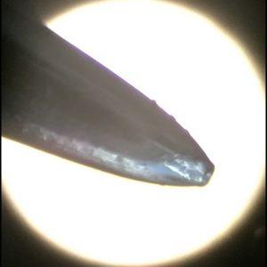Spitze NoName Nadel 1
